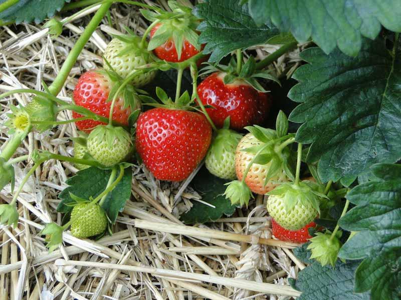 frutta e verdura pisa